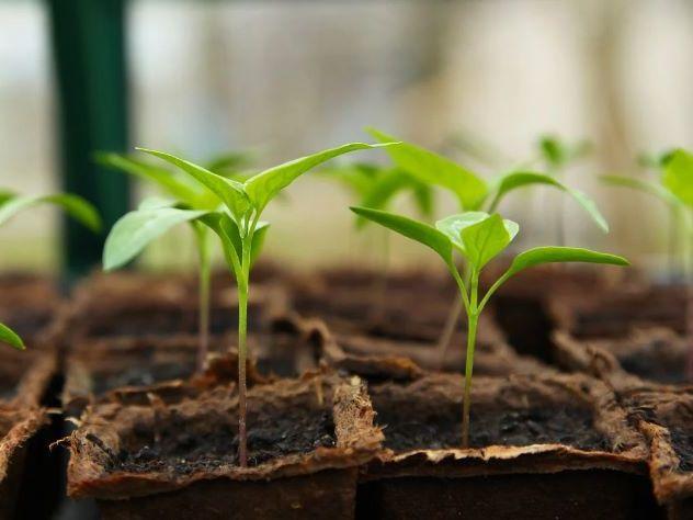Horticulture/Gardening Workbook