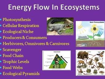 Energy flow in ecosystems.