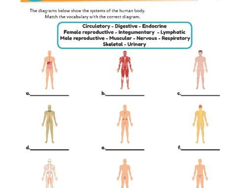Human Organ Systems