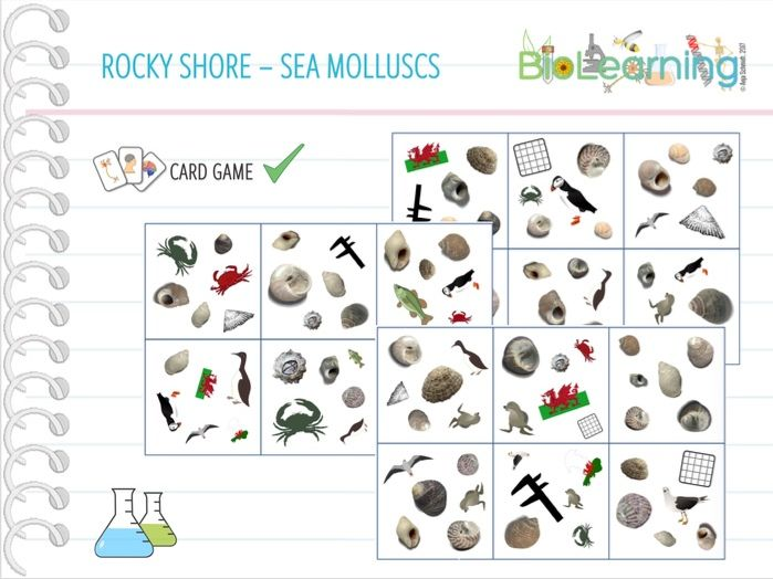 Rocky shore - Molluscs -Card Game (KS5)