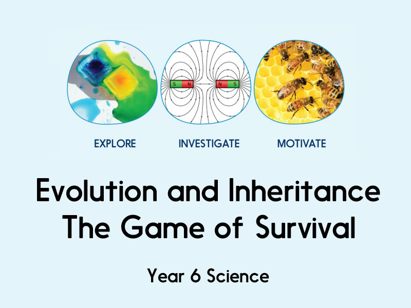 Evolution and Inheritance - The Game of Survival - Year 6