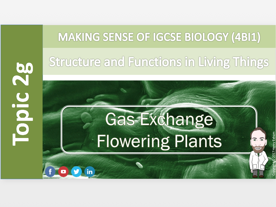 IGCSE Biology 9-1 - 2g Gas Exchange - Flowering Plants