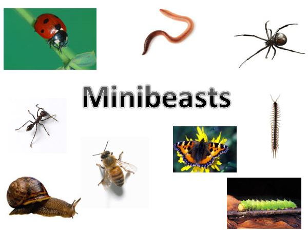 Minibeasts PowerPoint and Millionaire Quiz