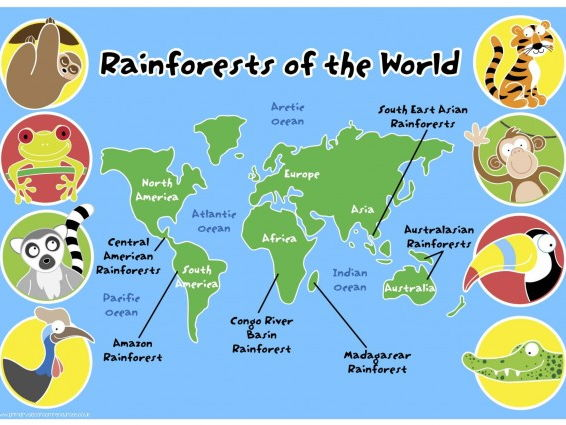 Primary classroom resources teaching resources tes rainforests of the world map pack gumiabroncs Gallery