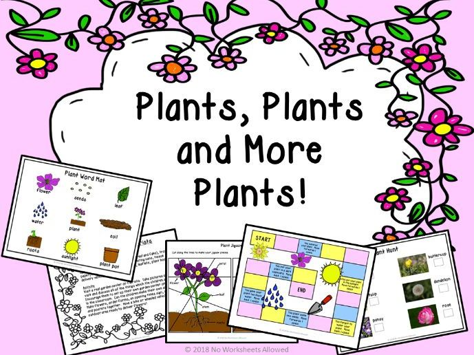 Plant Investigation and Activity Pack