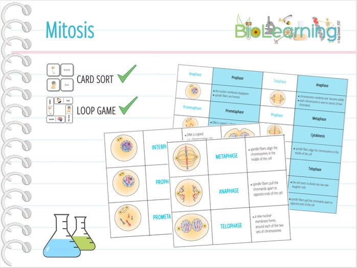Mitosis - Card Sort and Loop Game