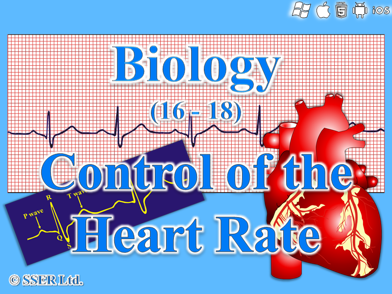 3.6.1.3 Control of the Heart Rate