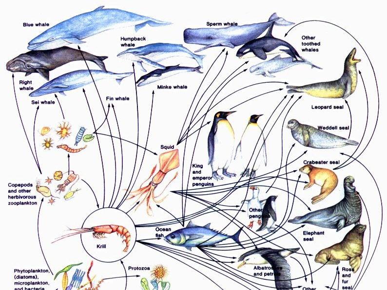 CB9 Edexcel - lesson 1: ecosystems