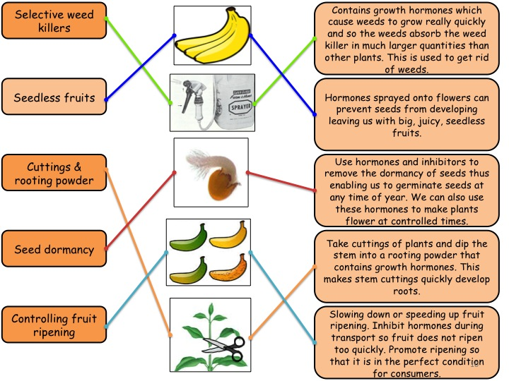 11.10 Using Plant Hormones GCSE (Grade 1-9) Biology