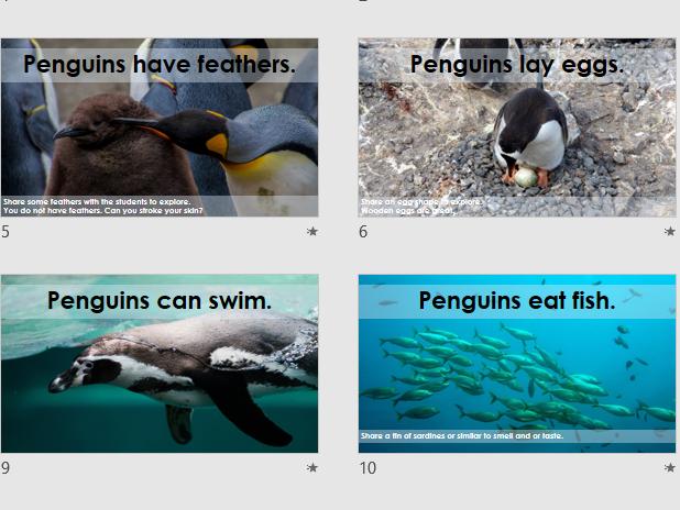 Penguin Sensory Science