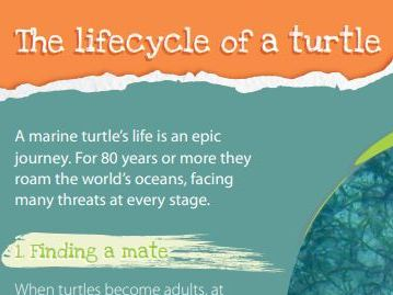Lifecycle of a Turtle
