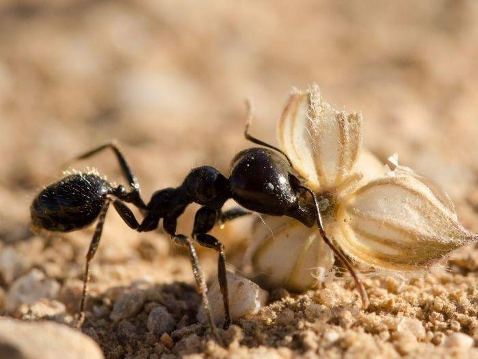 ВыВыявление зависимости активности муравьев от времени суток в домашних условиях