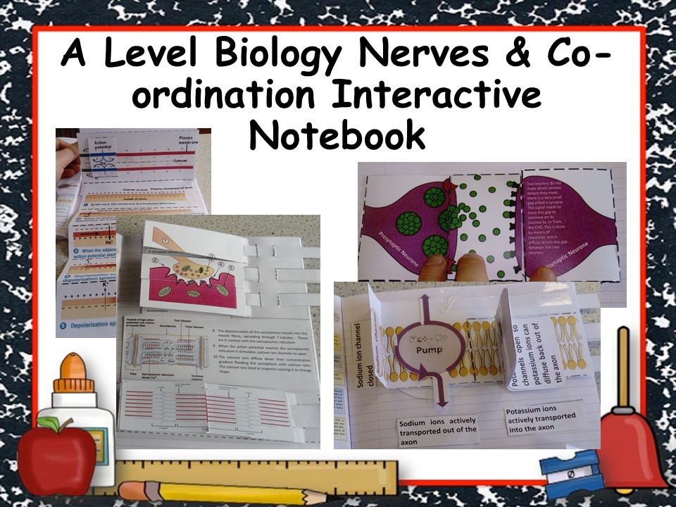 A Level Biology Nerves & Co-ordination Interactive Notebook