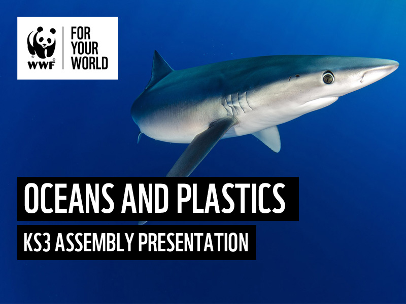 WWF Oceans and Plastics - KS3 Assembly Presentation