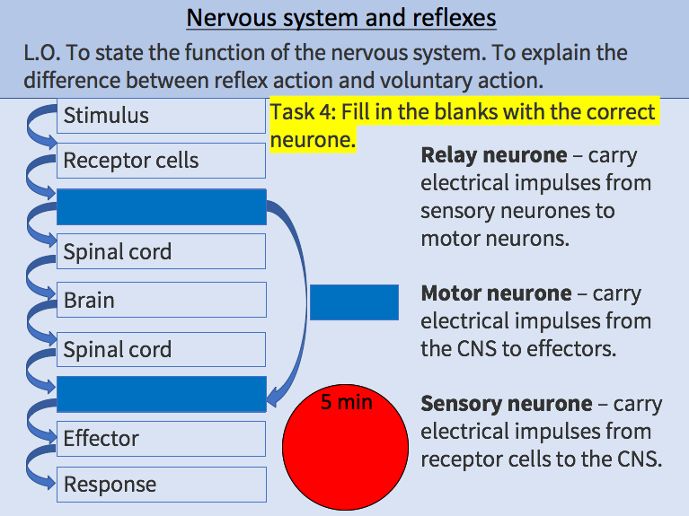 Nervous System / Reflex Action / Voluntary Action