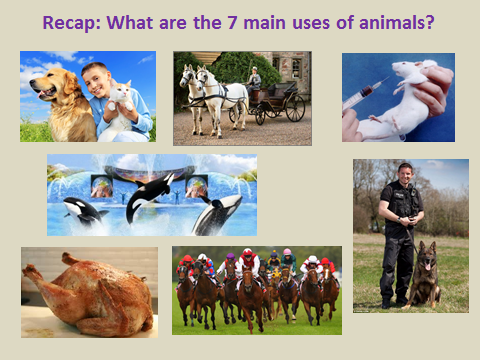 Christian attitudes to the use and abuse of animals. PowerPoint and Worksheet