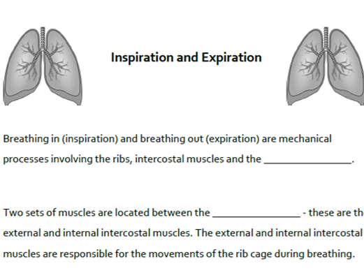 A&P Respiratory System: Mechanisms of Breathing Cloze