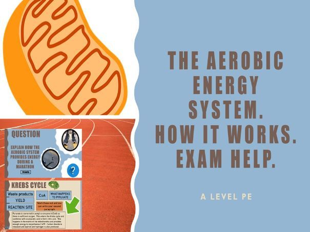 The Aerobic Energy System - how it works - exam help