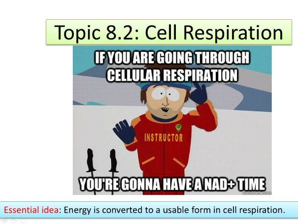 IB Biology HL Unit 8.2: Cell Respiration