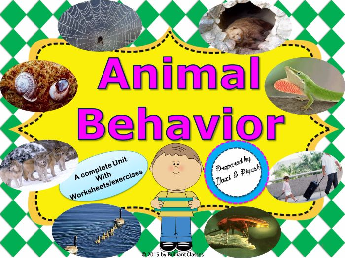 Year 7 English Worksheets Printable Excel Animal Behavior  Unit With Worksheets By Ilaxippatel  Teaching  Maths Worksheets Grade 3 Excel with Reading Comprehension Worksheet For Grade 1 Excel Animal Behavior  Unit With Worksheets By Ilaxippatel  Teaching Resources   Tes Writing Instructions Worksheets