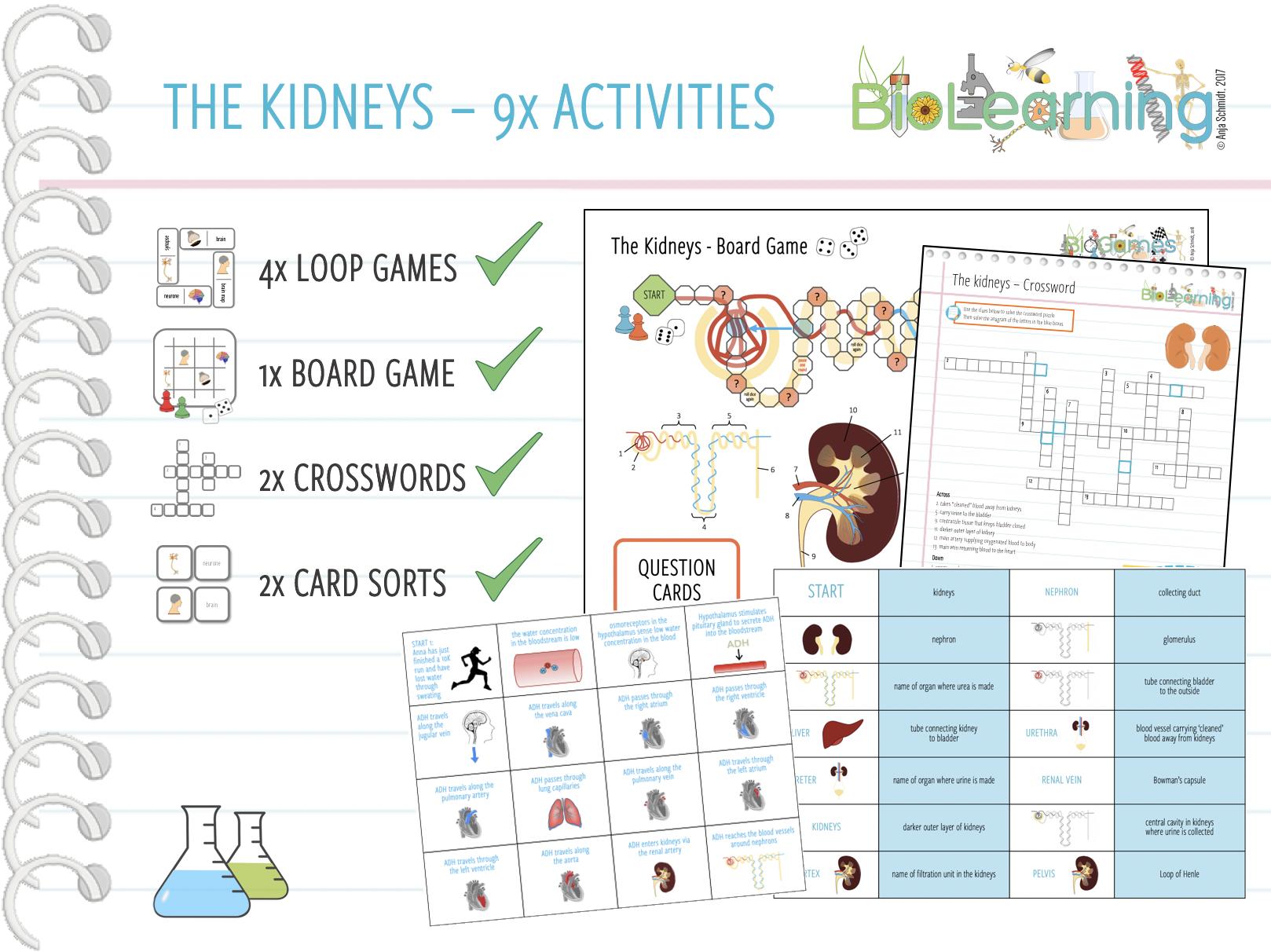 The Kidneys - 9x Activities Bundle (KS4)