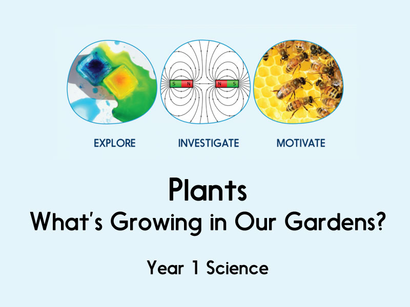 Plants whats growing in our gardens year 1 by hamiltontrust cover image ccuart Gallery