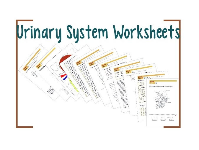 Urinary System Worksheet 2 By Biogeoscience Teaching Resources Tes