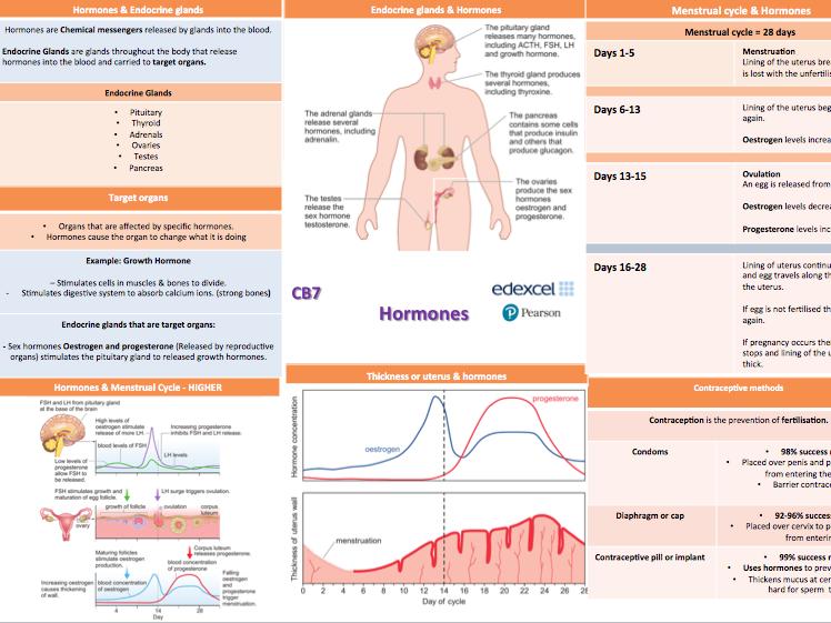 Edexcel 9-1 Science: B7 Hormones Knowledge Organiser