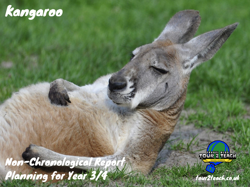 Kangaroo: Non-Chronological Report Planning for Year 3/4