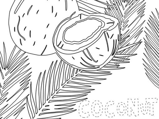Coconut colouring page.