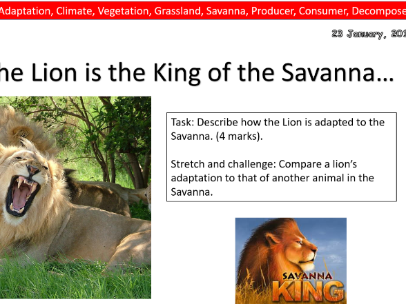 The Savanna Ecosystem- Whole Lesson- The Lion King- Geography
