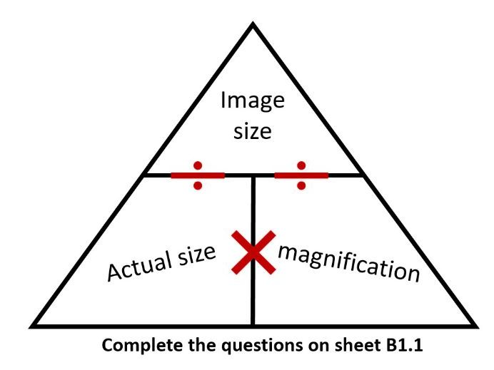 B1 Part 1 Cell Structure