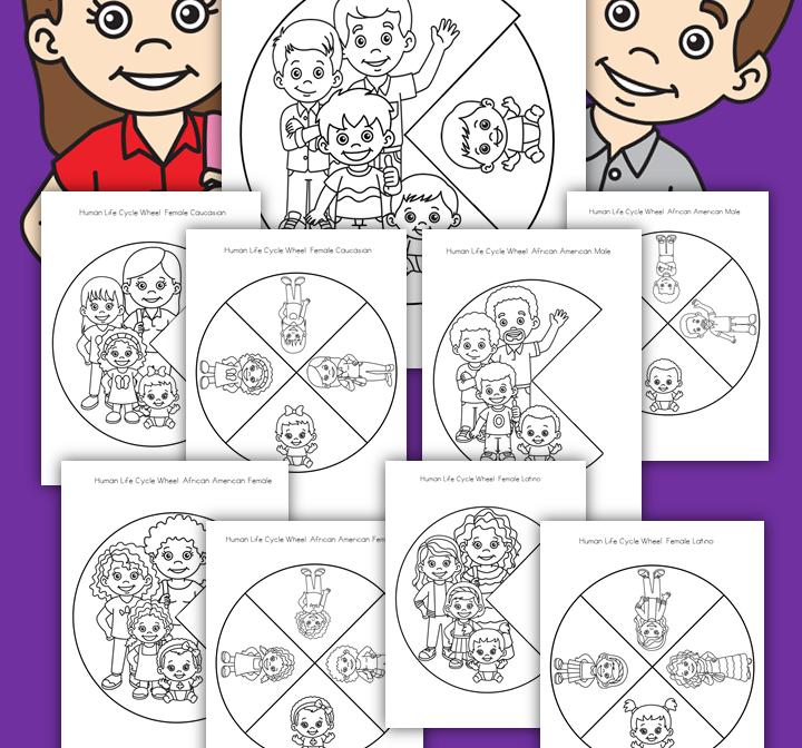 Human Life Cycle Wheel