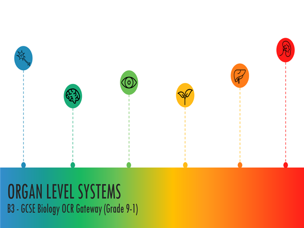 B3 Organ Level Systems Powerpoint: GCSE Biology OCR Gateway (Grade 9-1)