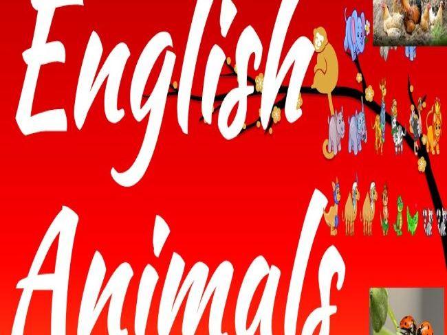 English (Animals)