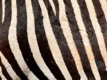 Close Up Animal Picture Quiz - Tutor Activities - Wolsey Academy