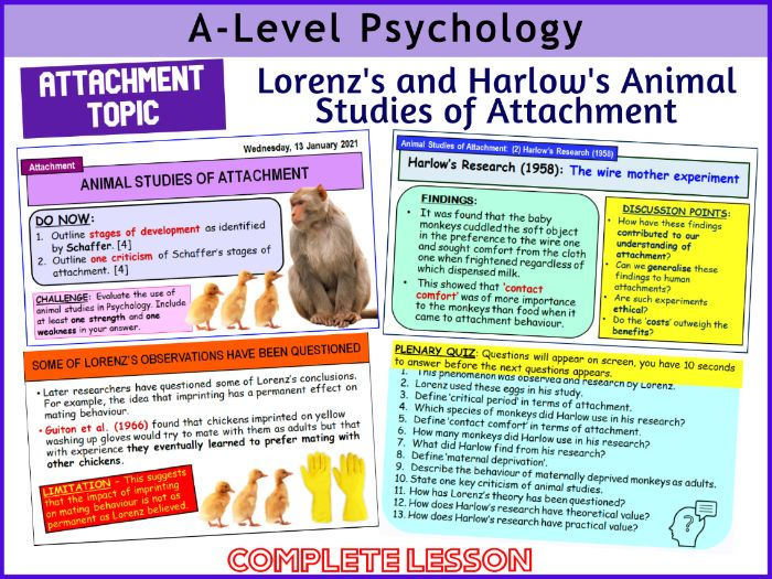 A-Level Psychology - LORENZ'S & HARLOW'S ANIMAL STUDIES OF ATTACHMENT (Year 1 Attachment)