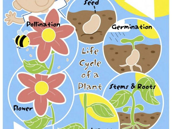 Life Cycle of a Plant Mini Poster/Mat Pack
