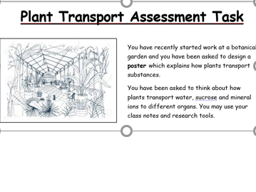 Transport in Plants Formative Assessment Task (GCSE/IGCSE)