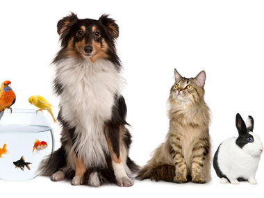 Los animales - Pets and Animals - Spanish Year 7