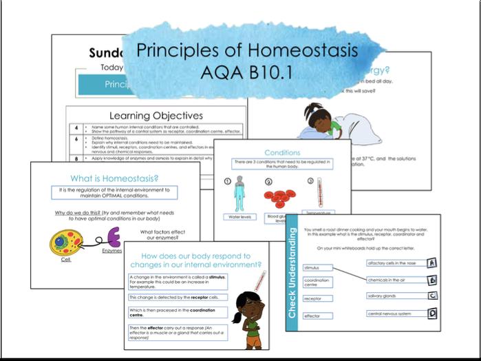 B10.1 Principles of Homeostasis AQA 9-1 Lesson