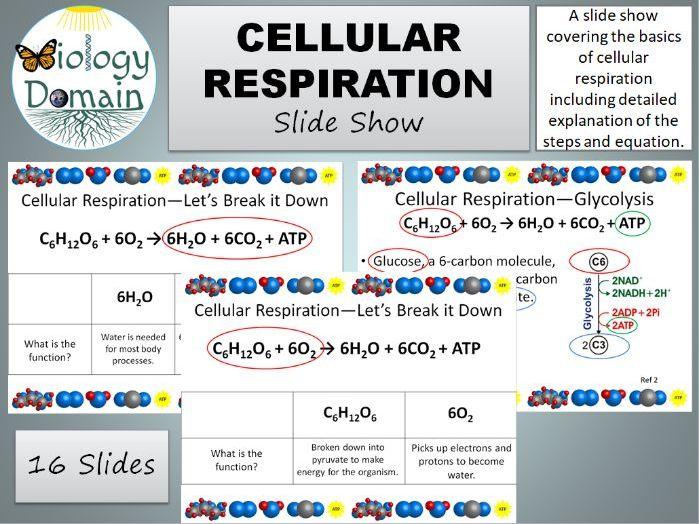 Cellular Respiration Slide Show