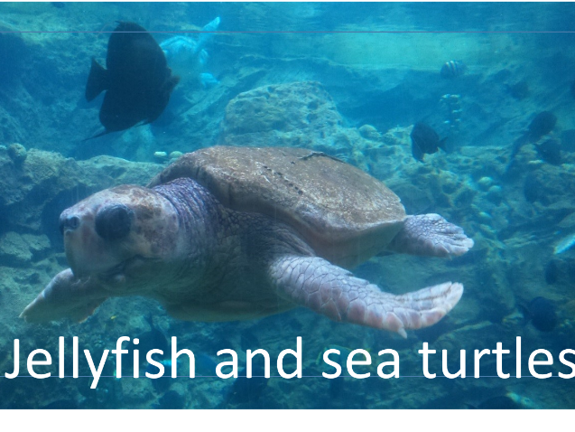 Jellyfish and sea turtle facts and information