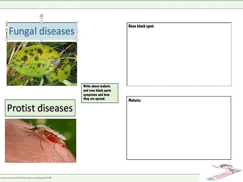 fungal and protist diseases worksheet by mr science teaching resources tes. Black Bedroom Furniture Sets. Home Design Ideas