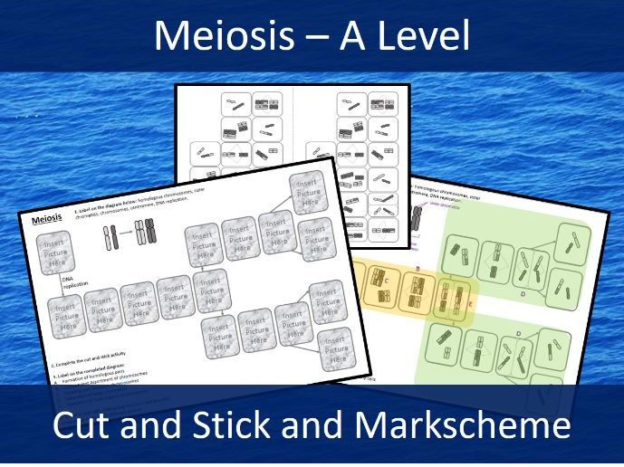 Meiosis Cut and Stick Activity - A level Biology - and markscheme