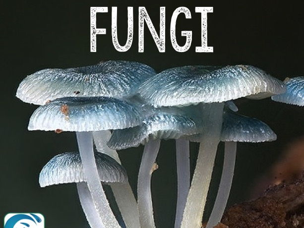 Fungi PowerPoint and Notes