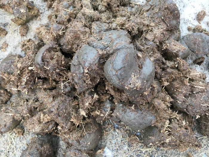 Science: Identifying Poo and Animal Tracks