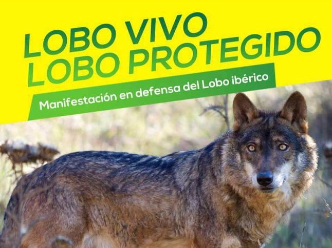 Manifestaciones: La Lucha por el Lobo (Protests in Spain: The fight for the Iberian wolf)