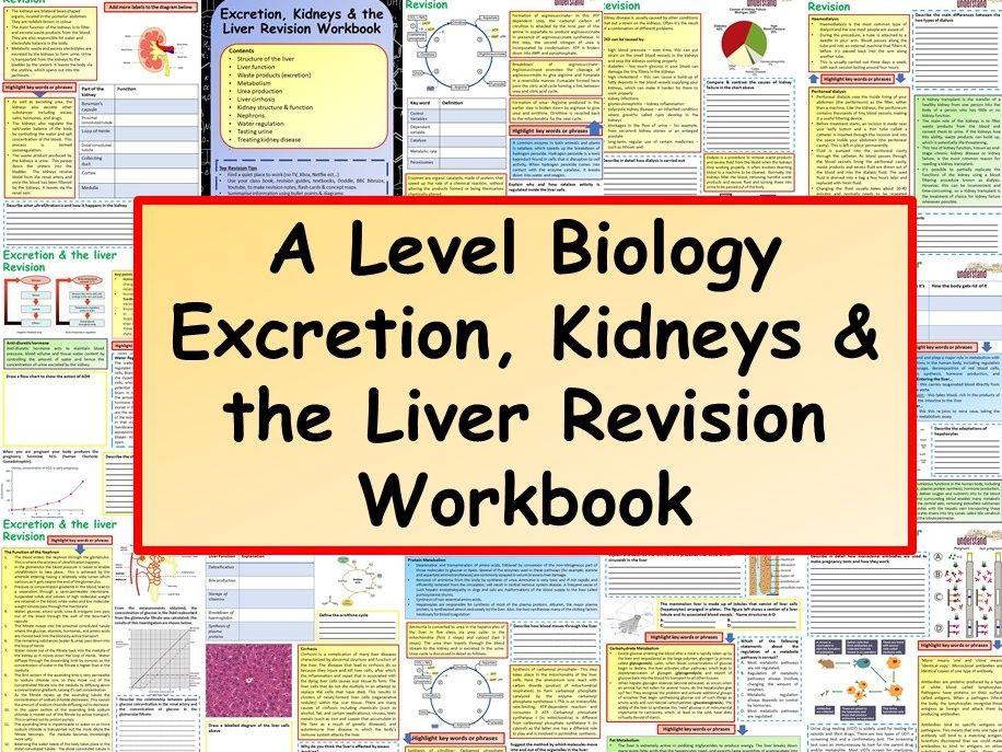 OCR / AQA A Level Biology Excretion, Kidneys & the Liver Revision Workbook