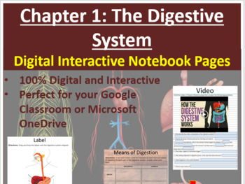 The Digestive System - Digital Interactive Notebook Pages